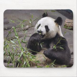 Giant panda eating bamboo mouse pad