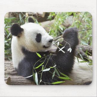 Giant panda eating bamboo mouse pads