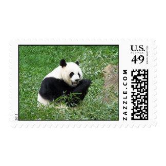 Giant Panda Eating Bamboo Postage Stamp