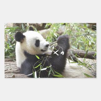 Giant panda eating bamboo rectangular sticker