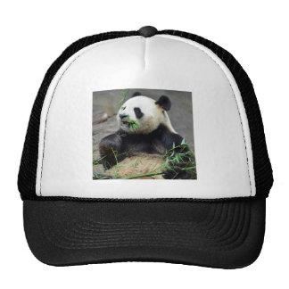 Giant panda eating bamboo trucker hat