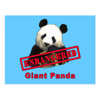 Giant Panda Endangered products Post Cards