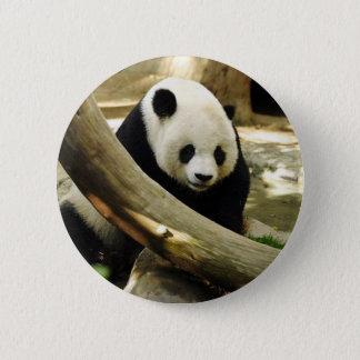 Giant Panda Gao Gao at the San Diego Zoo Pinback Button
