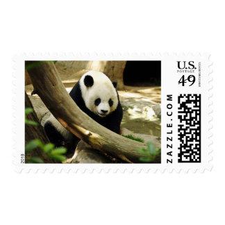 Giant Panda Gao Gao Postage Stamp