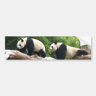 Giant panda in a wild animal zoo photography. car bumper sticker