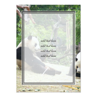 Giant panda in a wild animal zoo photography. card