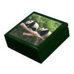 Giant panda in a wild animal zoo photography. trinket box