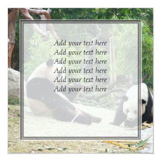Giant panda in a wild animal zoo photography. invitation