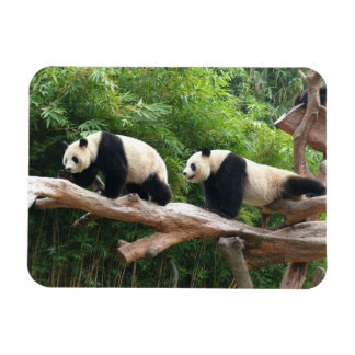 Giant panda in a wild animal zoo photography flexible magnets