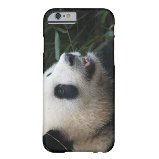 Giant Panda in Bamboo forest Barely There iPhone 6 Case
