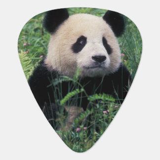 Giant panda in the grass, Wolong Valley, Sichuan Guitar Pick