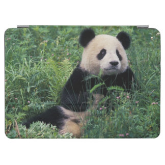 Giant panda in the grass Wolong Valley Sichuan iPad Air Cover