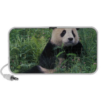 Giant panda in the grass, Wolong Valley, Sichuan Portable Speaker