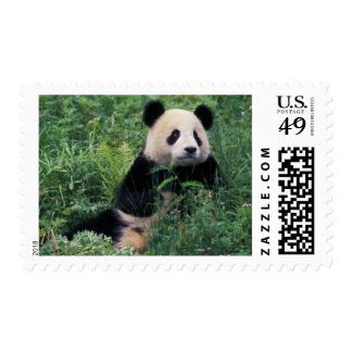 Giant panda in the grass, Wolong Valley, Sichuan Postage Stamp