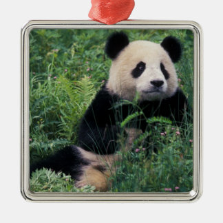 Giant panda in the grass, Wolong Valley, Sichuan Square Metal Christmas Ornament
