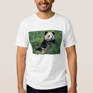 Giant panda in the grass, Wolong Valley, Sichuan T Shirts