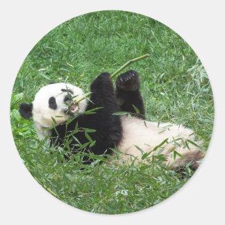 Giant Panda Lounging Eating Bamboo Classic Round Sticker