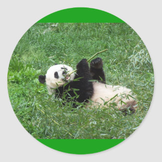 Giant Panda Lounging Eating Bamboo Classic Round Sticker