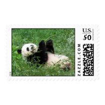 Giant Panda Lounging Eating Bamboo Postage