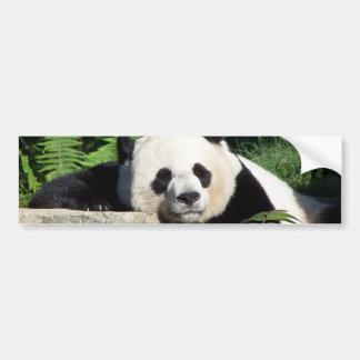 Giant Panda Napping Bumper Sticker