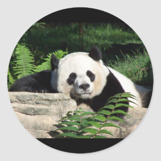 Giant Panda Napping Classic Round Sticker