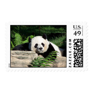 Giant Panda Napping Stamps