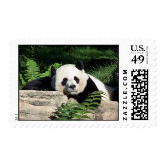 Giant Panda Napping Postage Stamp