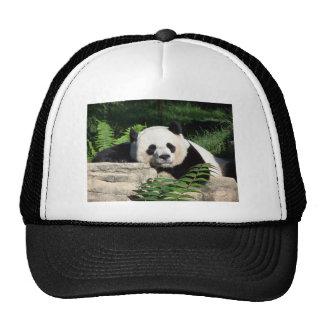 Giant Panda Napping Trucker Hat
