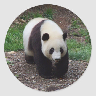 Giant Panda Photo Stickers