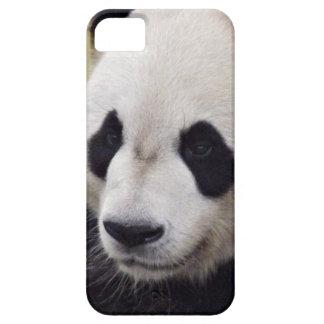Giant Panda Portrait iPhone 5 Case