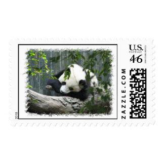 Giant Panda Postal Stamp