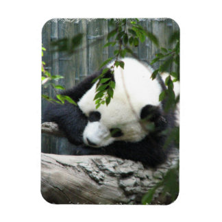 Giant Panda  Premium Magnet Rectangle Magnets