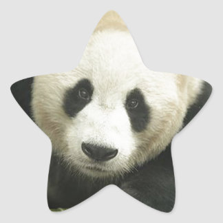 """Giant panda"" Star Sticker"