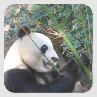 Giant Panda Sticker