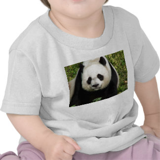 Giant Panda Straight On Face Infant Baby Shirt