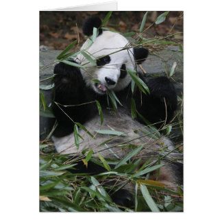 Giant pandas at the Giant Panda Protection & 2 Card
