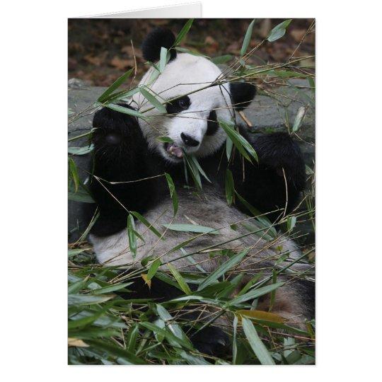 Giant pandas at the Giant Panda Protection & 2 Card