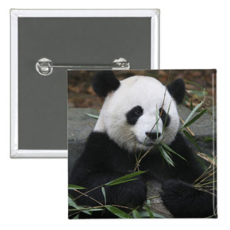 Giant pandas at the Giant Panda Protection & 2 Inch Square Button