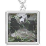 Giant pandas at the Giant Panda Protection & 2 Square Pendant Necklace