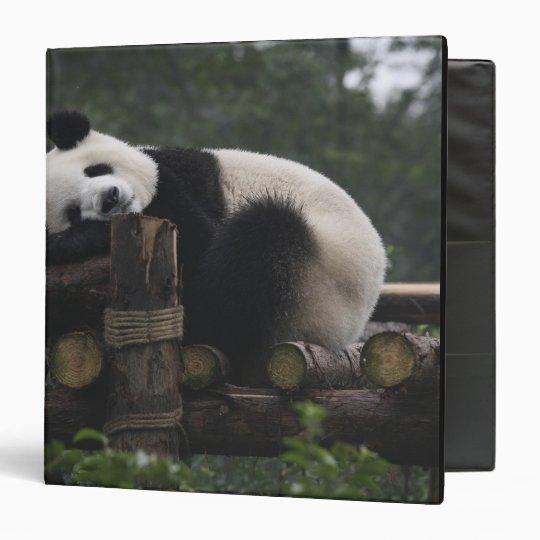 Giant pandas at the Giant Panda Protection & 3 3 Ring Binder