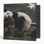 Giant pandas at the Giant Panda Protection & 3 Binder