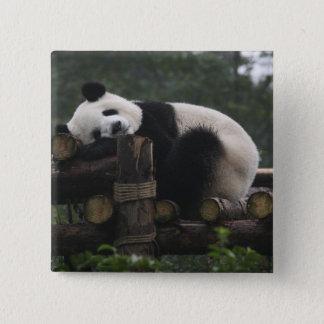 Giant pandas at the Giant Panda Protection & 3 Button