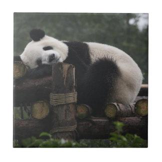 Giant pandas at the Giant Panda Protection & 3 Ceramic Tile