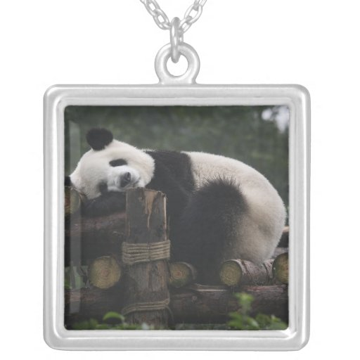 Giant pandas at the Giant Panda Protection & 3 Custom Necklace