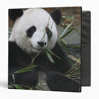Giant pandas at the Giant Panda Protection & 3 Ring Binder