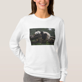 Giant pandas at the Giant Panda Protection & 3 T-Shirt