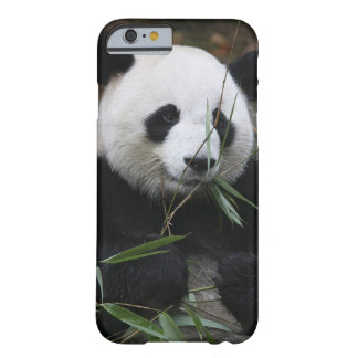 Giant pandas at the Giant Panda Protection Barely There iPhone 6 Case