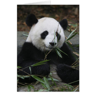Giant pandas at the Giant Panda Protection & Card