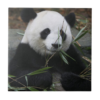 Giant pandas at the Giant Panda Protection Ceramic Tile