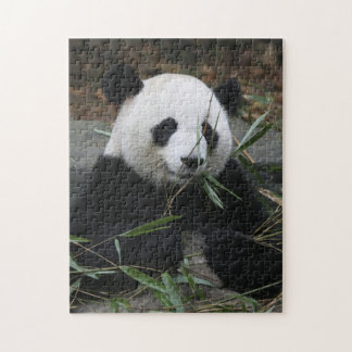 Giant pandas at the Giant Panda Protection Jigsaw Puzzle